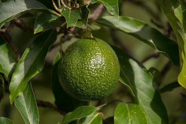 Cum te poate ajuta uleiul de canepa sau uleiul de avocado sa tratezi depresia
