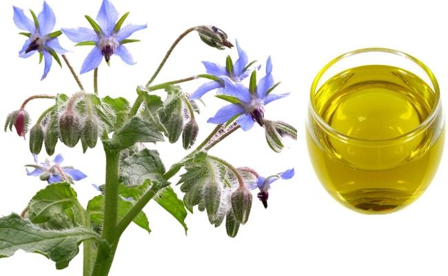Uleiul de borago – 7 beneficii pentru piele, artrita si inflamatii